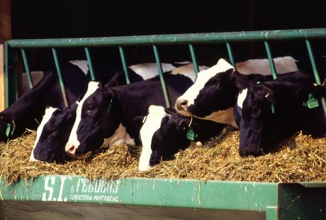 With their years of expertise Paragon ID's RFID solutions can help you benefit from RFID tagging of livestock